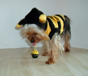 Bella-in-bee-suit