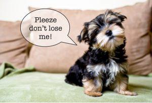 pleeze-don't-lose-me