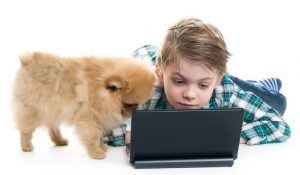 young boy morkie computer stock