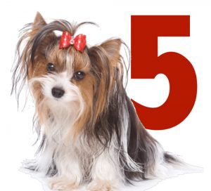 5-ways-to-check-your-dogs-health