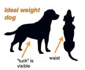 Diagram of dog profile showing ideal weight dog