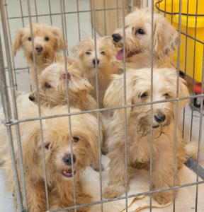paris puppy mill 3