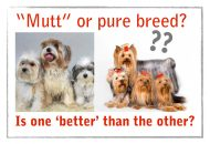 mutt-or-pure-breed