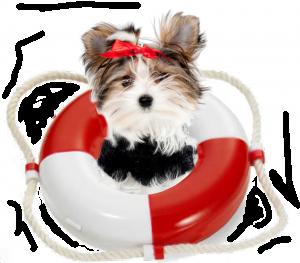 rescue-morkie