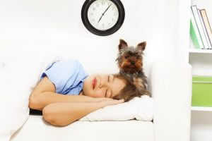 View of small cute Yorkshire Terrier with sleeping boy on white sofa and clock on the wall