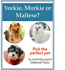 yorkie-morkie-maltese-downloadable-book
