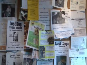 lost dogs posters