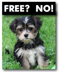free morkie scam