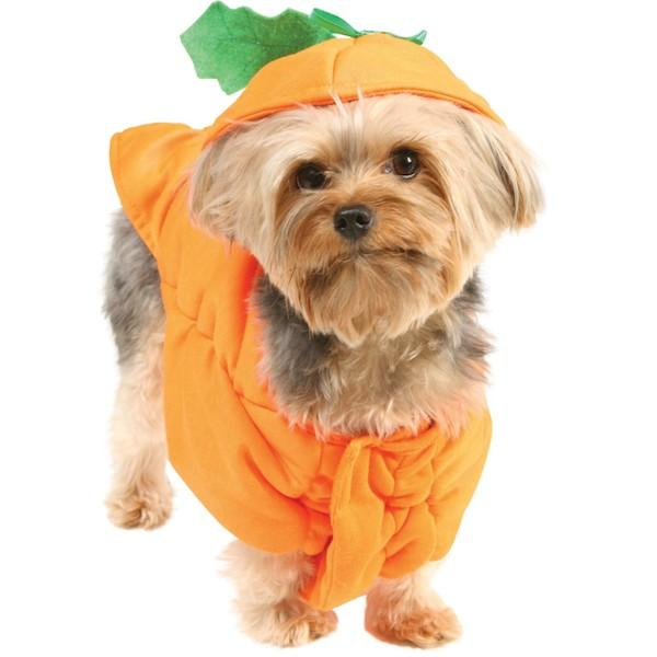 dog-in pumpkinn costume