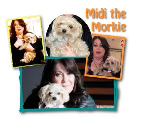 midi the morkie