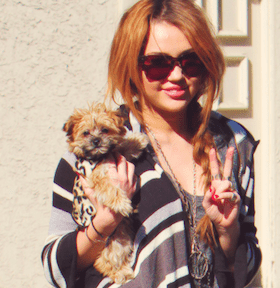 miley and morkie