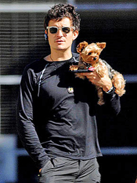 orlando_bloom_yorkie