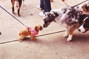 Dog-Socialization1