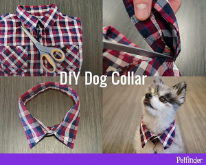 DIY dog collar from petfinder