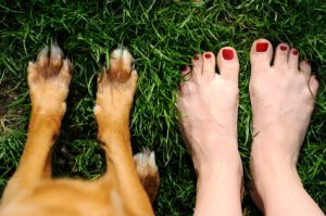 mani pedi human dog stock photo