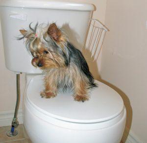 tink toilet shy sm