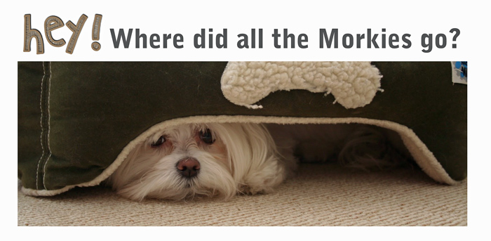 where-are-the-morkies
