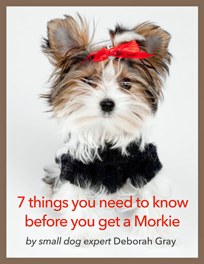 FREE-REPORT--7-THINGS-YOU-NEED-TO-KNOW-BEFORE-YOU-GET-A-MORKIEmd