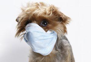 Sadie Mae has the flu