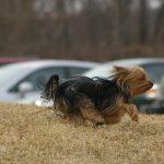tinker running