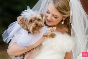 yorkie in wedding party from-ameliastrauss.com