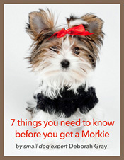 FREE REPORT- 7 THINGS YOU NEED TO KNOW BEFORE YOU GET A MORKIE.p