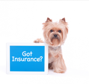 got insurance morkie yorkie thumbnail