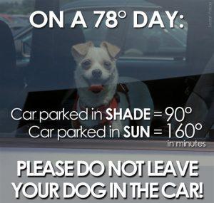 hot-dog-in-car