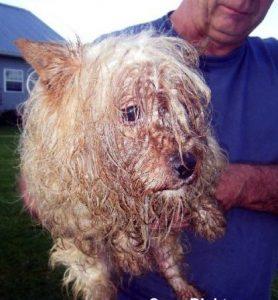 amish puppy mill dog
