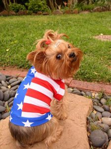 American Flag Dog Shirt_small