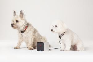 Petcube_Camera-2dogs
