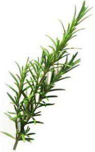 Rosemary stem