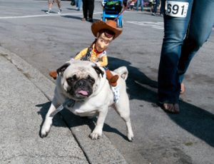 Woody, the cowboy from Toy Story, rides a pug on the way to the parade.
