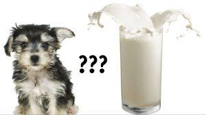 can-dogs-drink-milk