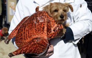 A dog dressed as a turkey participates in the 23rd Annual Tompkins Square Halloween Dog Parade on October 26, 2013 in New York City. Thousands of spectators gather in Tompkins Square Park to watch hundreds of masquerading dogs in the countrys largest Halloween Dog Parade. (Timothy Clary/AFP/Getty Images)