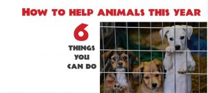 6-things-you-can-do-to-help-animals