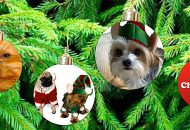 Merry Morkie Christmas
