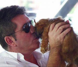 simon cowell with yorkie puppy