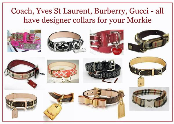 Designer dog collars come in every style and colour you can imagine.