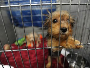 dog surrendered to shelter