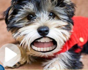 denture-my-dog