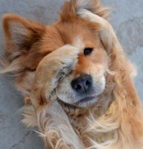 Embarrassed-Dog