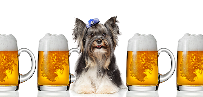 can-dogs-drink-beer-feature