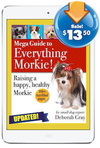 mega guide to Morkies
