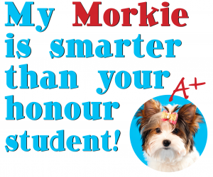 My Morkie is smarter than your kid