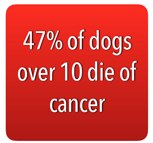 47% of dogs over 10 die of cancer