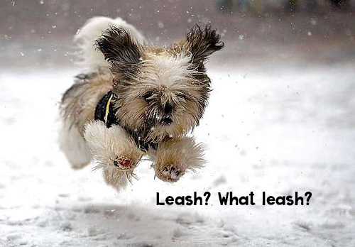 what leash