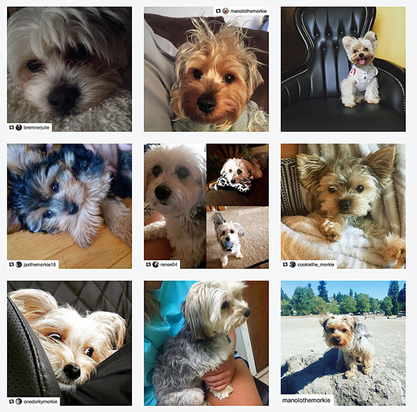 Instagram-morkies