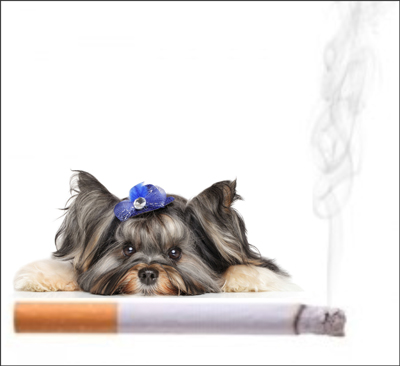 Cigarettes and dogs