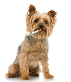 dog-smoking